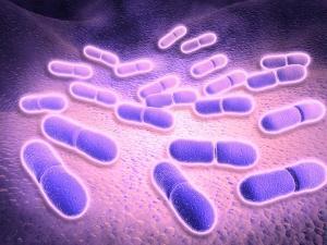 Microscopic View of Listeria Monocytogenes
