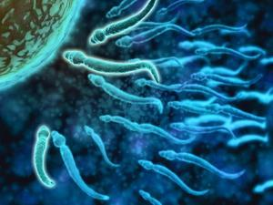 Microscopic View of Sperm Swimming Towards Egg