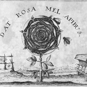 Rosicrucian Mystical Symbol by Middle Temple Library
