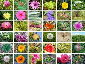 Nature Collage by miff32