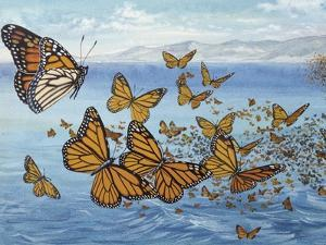 Migration of Monarch Butterflies (Danaus Plexippus), Nymphalidae