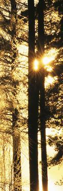 Rising Sun - Detail by Mikael Svensson