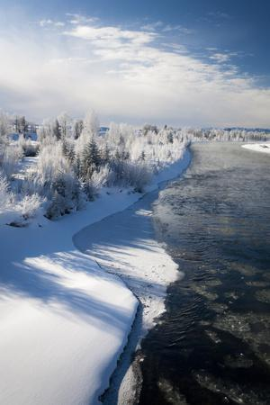 Hoar Frost Clings to Trees Along the Snake River in Grand Teton National Park, Wyoming