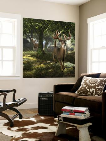 Big Buck Whitetail Deer by Mike Colesworthy