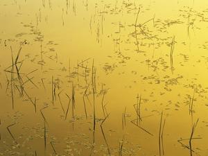 Sunset on Tilton Lake, Sudbury, Ontario, Canada by Mike Grandmaison