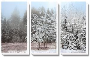 Frosty Morning by Mike Jones