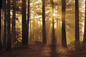 Tahoe Smoky Sunrise by Mike Jones