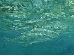 A Pair of Glittering Bonefish Prowl Just Below the Surface by Mike Rivken