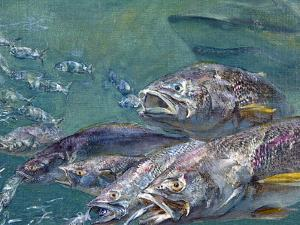 A School of Weakfish Flee an Oncoming Shark as Smaller Fish Lead the Way by Mike Rivken