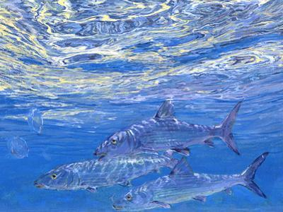 A Trio of Bonefish Cruise Just Beneath the Surface in Sparkling Blue Water of the Bahamas