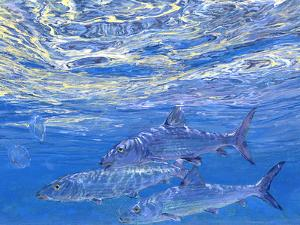 A Trio of Bonefish Cruise Just Beneath the Surface in Sparkling Blue Water of the Bahamas by Mike Rivken