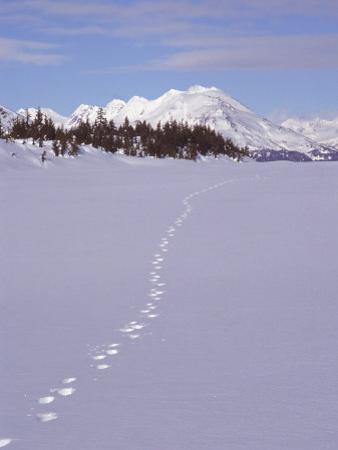 Wolf Tracks and Mountain Range, Alaska