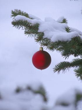 X Mas Ornament on Tree by Mike Robinson
