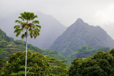 A Palm Tree and Lush Vegetation in a Mountainous Tropical Rain Forest by Mike Theiss