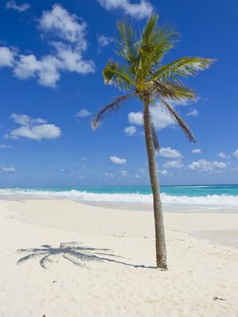 A Single Palm Tree Casts a Shadow on an Amazing Bermuda Beach by Mike Theiss