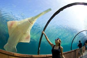 A Woman Points to a Carpenter Shark, or Sawfish, Swimming over an Underwater Tunnel by Mike Theiss