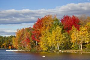 Brilliantly Colored Trees on a Lake Shore During Autumn by Mike Theiss