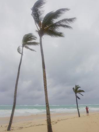 Large Palm Trees Sway in Wind as Hurricane Igor Approaches the Beach by Mike Theiss
