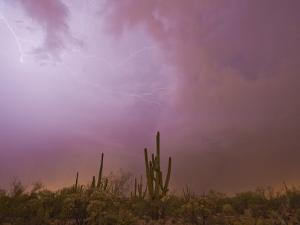 Lightning Brightens the Sky over the Desert During a Thunderstorm by Mike Theiss
