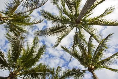 Looking Up into the Crown of Palm Trees, Against a Cloud-Filled Sky by Mike Theiss