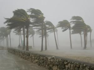 Palm Trees Blasted by Winds over 100 Mph During Hurricane Wilma by Mike Theiss