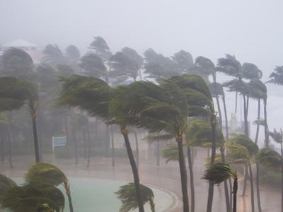 Palm Trees in the Wind and Rain as Hurricane Irene Makes Landfall by Mike Theiss