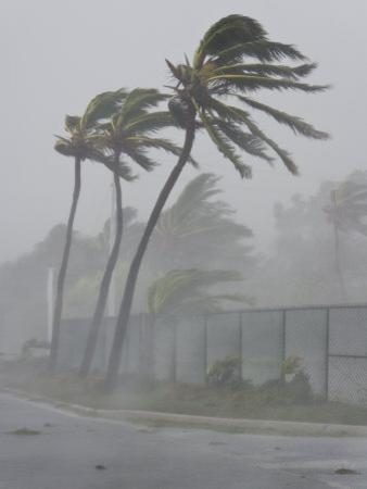 Palm Trees Sway in the Wind Created by Category 1 Hurricane Dennis by Mike Theiss