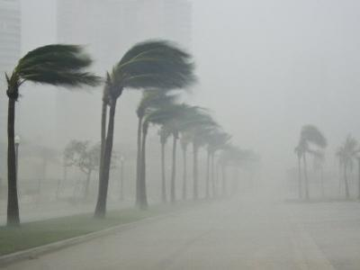 Palms Blow in 100 Mile-Per-Hour Winds as Hurricane Wilma Hits Land by Mike Theiss