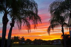 Silhouetted Palm Trees and a Colorful Sky over Coastal Homes at Sunset by Mike Theiss