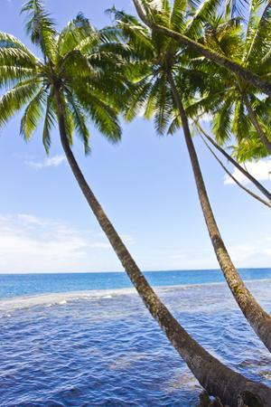 Tall, Thin Palm Trees Leaning Seaward from a Tropical Beach by Mike Theiss