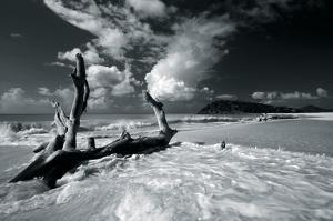 Driftwood Shore by Mike Toy