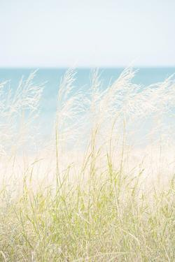 Ocean Grasses by Mike Toy