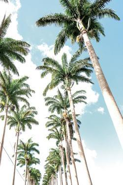 Palm Boulevard by Mike Toy