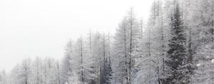 Winter Pines by Mikhaylov