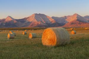 Hay Bales in a Field with the Rocky Mountains in the Background, Near Twin Butte, Alberta, Canada by Miles Ertman