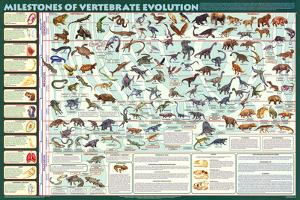 Milestones of Evolution Educational Science Chart Poster