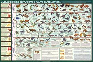 Milestones of Evolution Educational Science Chart Poster