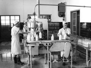 Milk Production, Zagreb, Yugoslavia, 1952