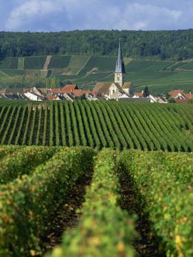 Chamery, Montagne De Reims, Champagne, France, Europe by Miller John