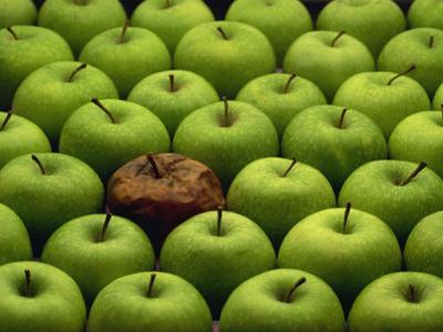 One Rotten Apple Amongst Other Green Apples