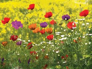 Another Pack Of Poppies by Milli Villa