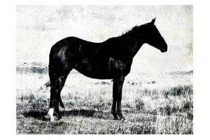 Horse Stance by Milli Villa