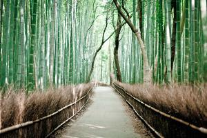 Bamboo Forest by Milton Correa