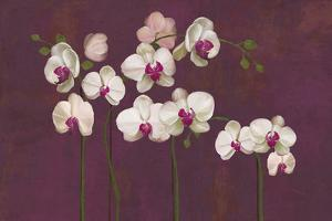 Orchid Dance by Mimi Roberts