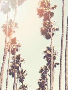 Palm by Mina Teslaru