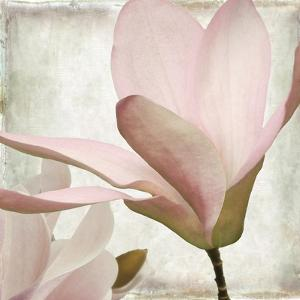Petal Purity II by Mindy Sommers