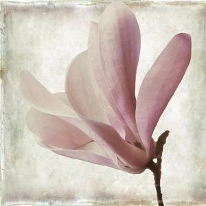 Petal Purity IV by Mindy Sommers
