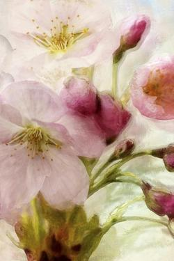 Pink Cherry Blossom by Mindy Sommers