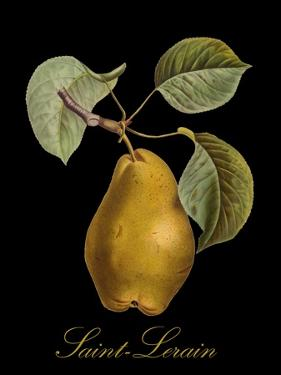 St. Lerain Pear by Mindy Sommers
