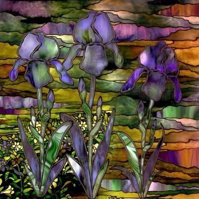 Sunset Irises